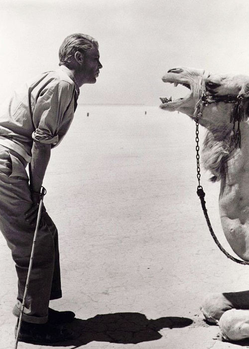 Peter O'Toole taunting a camel behind the scenes of Lawrence of Arabia (1962)