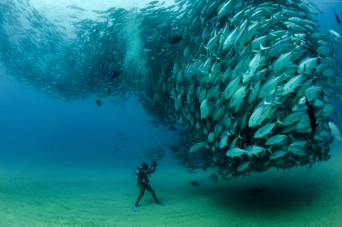 scuba-diving-with a swarm-of-fishes