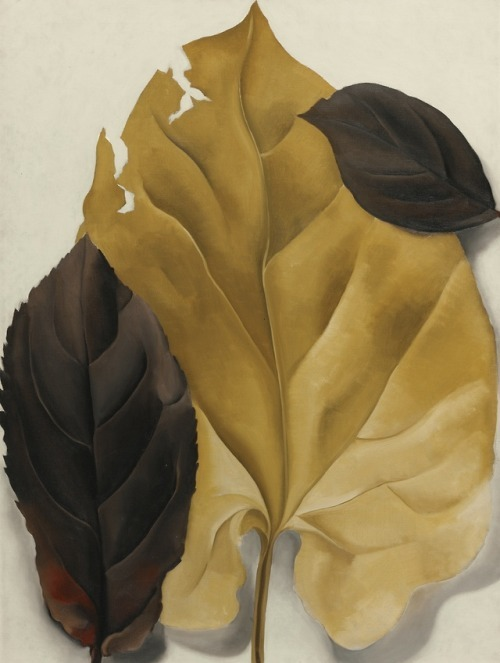 "Georgia O'Keeffe – Brown and Tan Leaves  1928  "" Si"