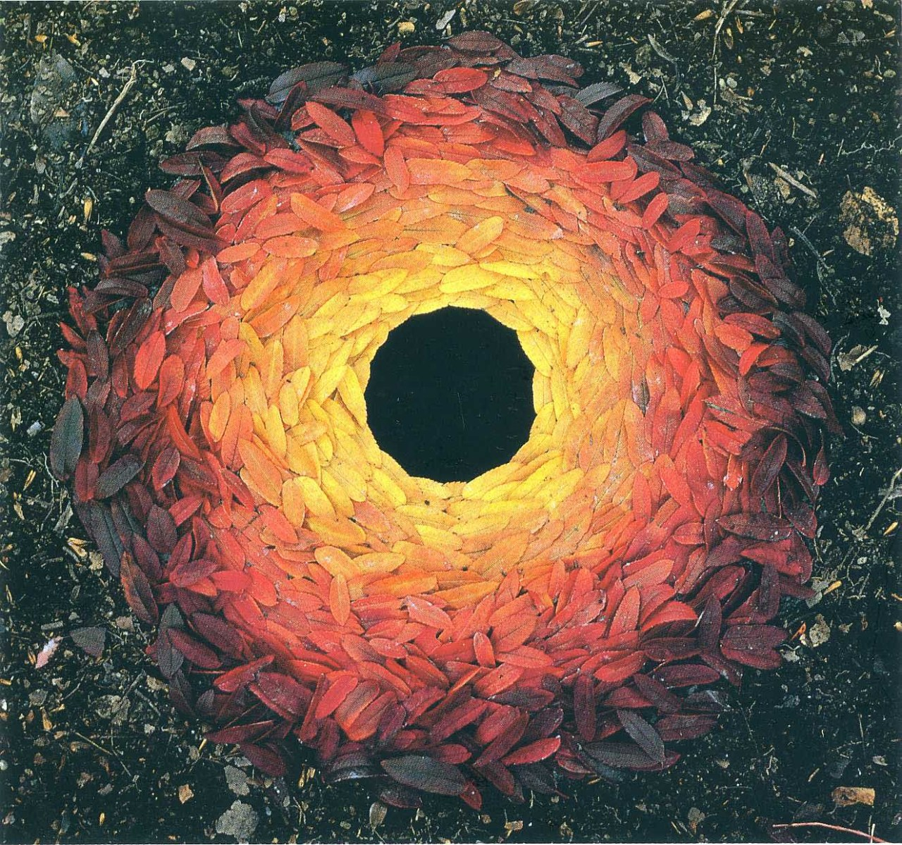 Andy Goldsworty